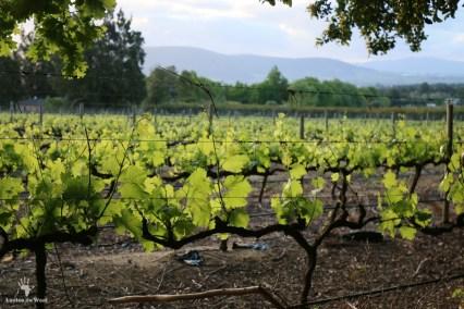 Mellasat Vineyards, Paarl Cape Winelands