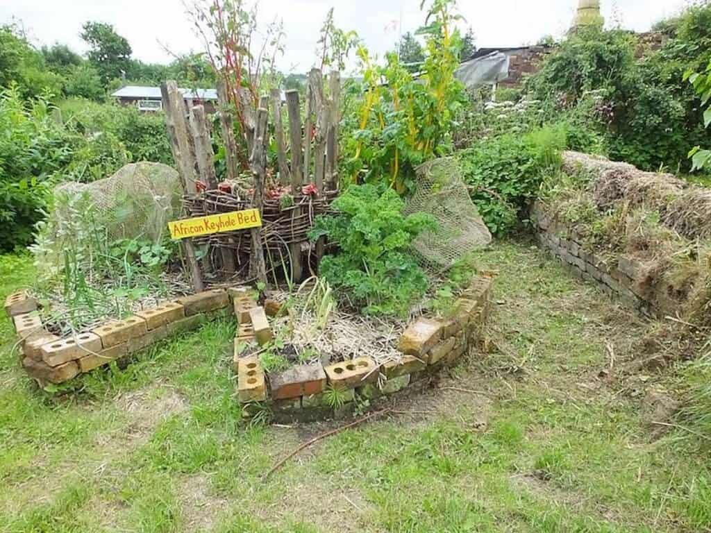 What Plant Raised Vegetable Garden
