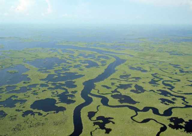 View of the unique ecosystem of Everglades National Park which makes it a natural UNESCO world heritage site