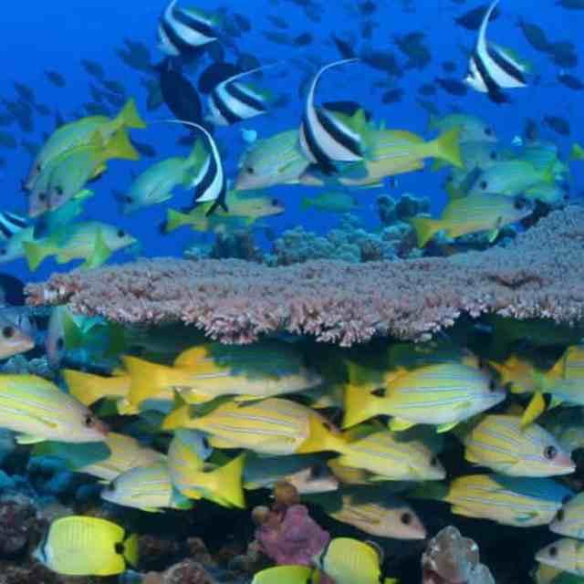 Endemic marine life in Papahānaumokuākea garnered UNESCO world heritage status in 2006