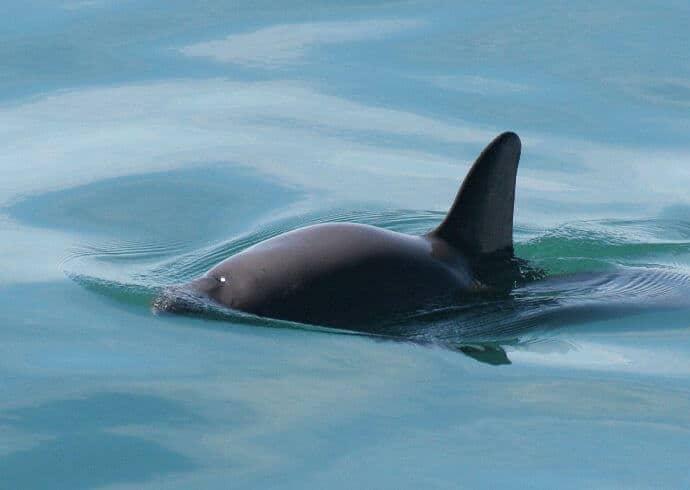 Rarest Sea Creature