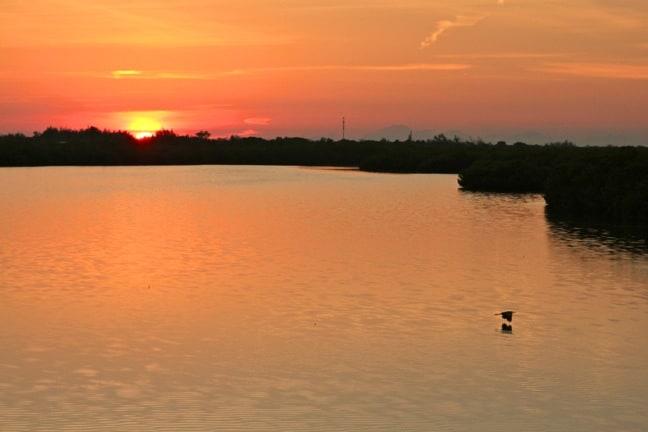 Egret in Flight at Sunset in J.N. Ding Darling National Wildlife Refuge