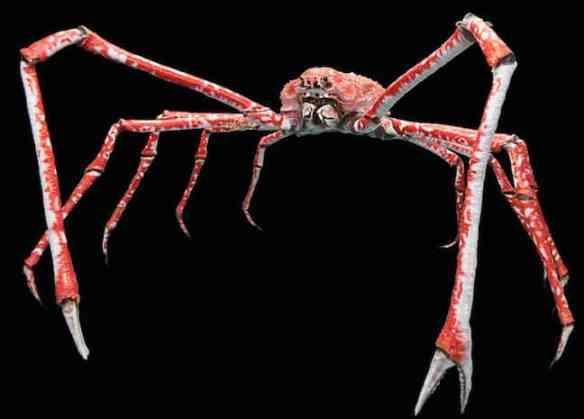 Weird Animals, Japanese Spider Crab