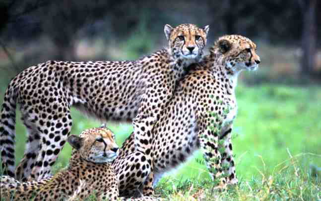 leopard family south africa