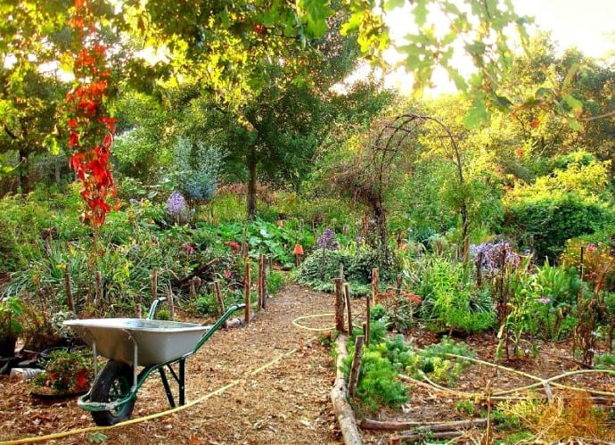 What Is Permaculture Gardening? An Intro to Permaculture ... on Backyard Permaculture Design id=25759