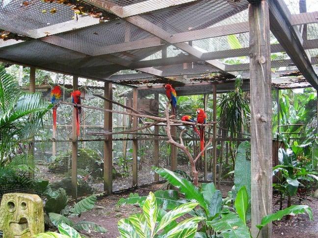 Scarlet Macaw aviary