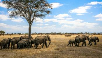 The 10 best national parks in usa for wildlife watching top 10 tanzania national parks reserves the ultimate tanzania safari fandeluxe Choice Image