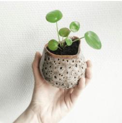 propagation success