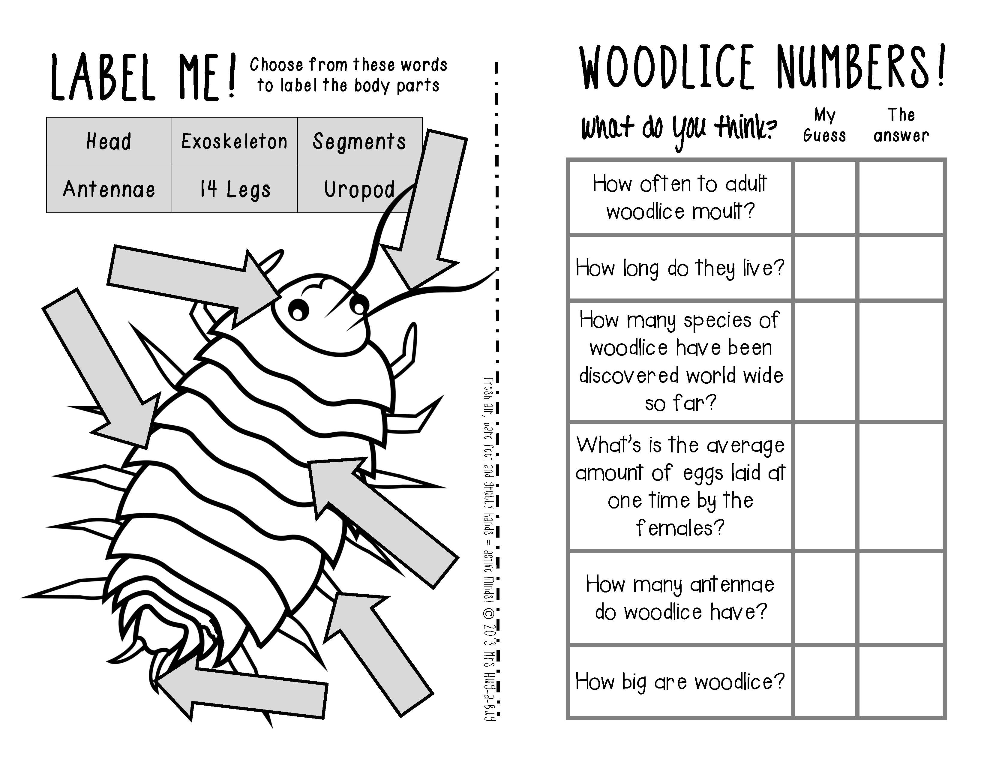 Woodlice Pill Bugs Sow Bugs Roly Polies Amp Potato Bugs