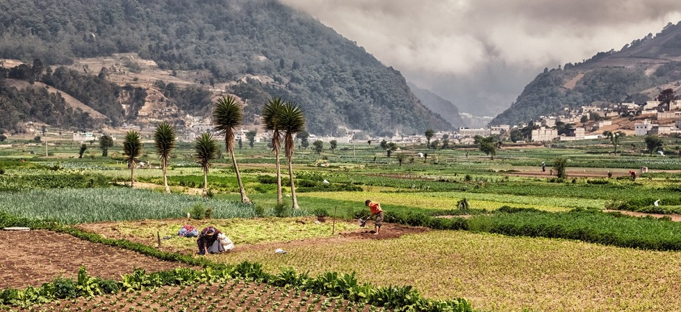 The Vegetable Fields of Almolonga, Guatemala