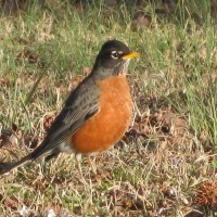The Resident Robin Leaves Home