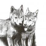 Greenheart-Premiums Puppy All Breeds dibujo