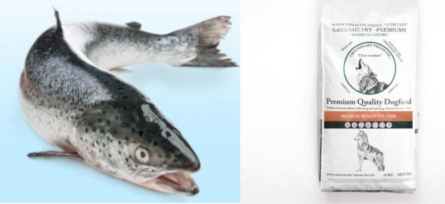 Pienso perros con salmón