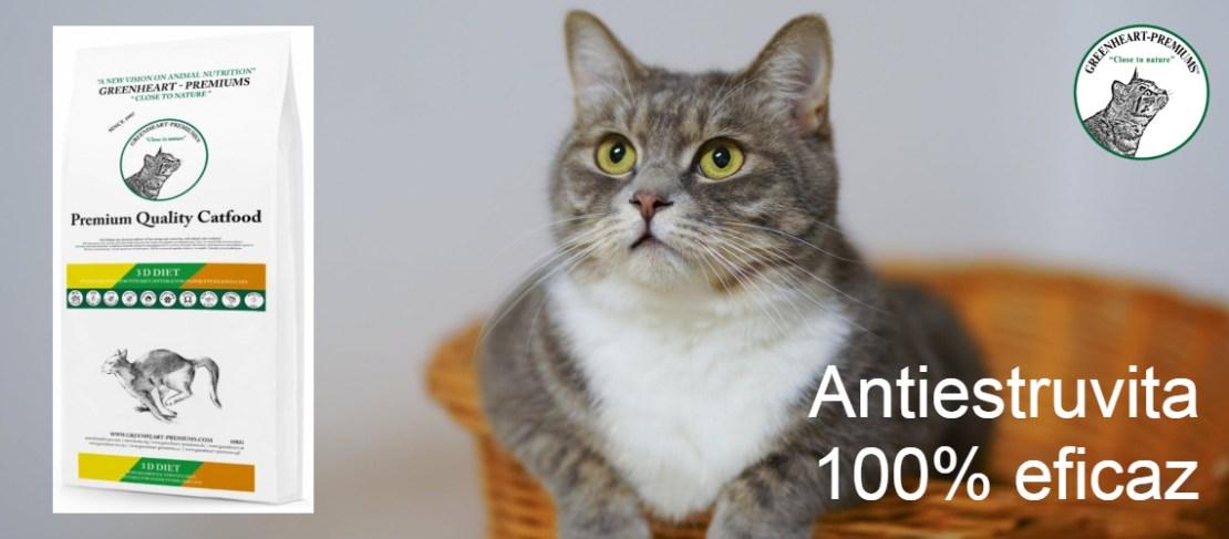 pienso gato antiestruvita eficaz