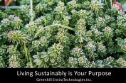 Living Sustainably is Your Purpose