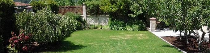Реновиране на стара трева (5)