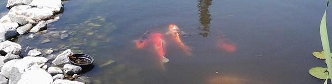 Езеро с риби