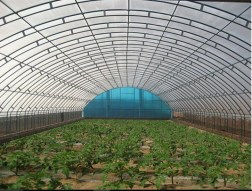 plastic film greenhouse2