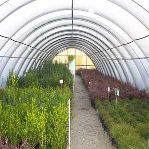 15 BEST HIGH TUNNEL WINTER CROPS