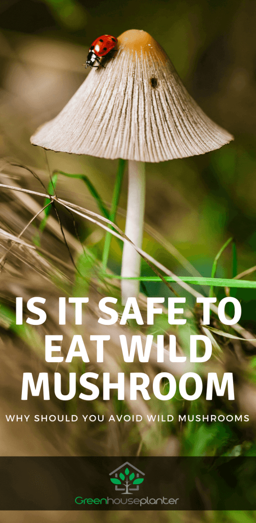 Is it safe to eat wild musroom