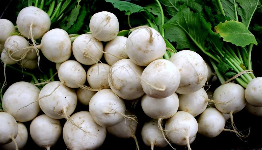 turnips greenhouse crops. 15 most profitable high tunnel winter crops