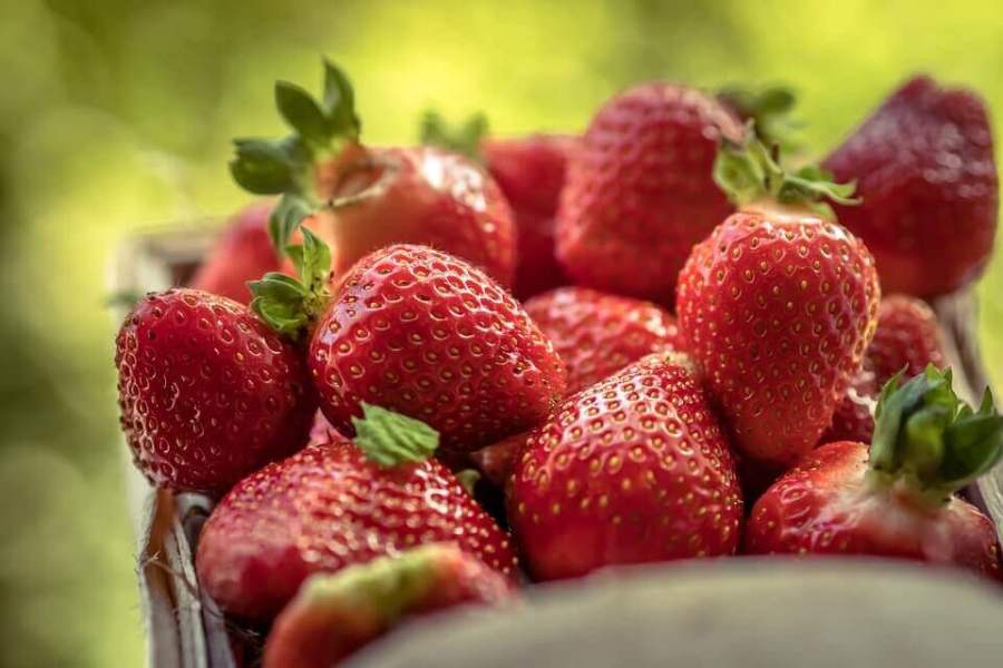 A beautify harvest of strawberries which are grown from seeds in pots