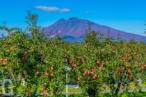 秋のりんご公園