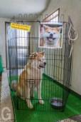 秋田犬会館