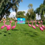 24-Pink-Flamingos-and-a-Youve-Been-Flocked-Flamingo-Yard-Sign-0-0
