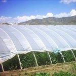Agfabric-12ft-x-25ftGreenhouse-Clear-Plastic-Film-Polyethylene-CoveringDIY-Gardening-Film55mil-0