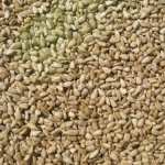 Coles-SM20-20-Pound-Sunflower-Meats-Seed-0-0