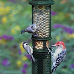 Squirrel-Buster-Peanut-Plus-Wild-Bird-Feeder-0