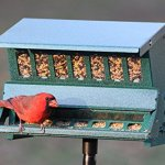 Woodlink-Absolute-II-Squirrel-Resistant-Bird-Feeder-Model-7536-0-0