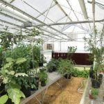 24-ft-x-16-ft-Wallace-Premium-Educational-Greenhouse-0