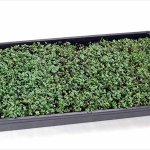 Hydroponic-Microgreens-Growing-Kit-Grow-Micro-Greens-Baby-Salad-Indoor-Garden-All-Supplies-Seeds-Trays-Etc-0-1