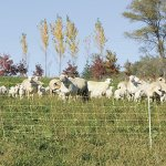 Premier-35-Electric-Sheep-Net-Fence-8356-Yellow-164-Roll-0