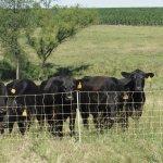 Premier-Enhanced-40-Electric-Sheep-Goat-Net-Fence-Yellow-9406EY-0-1