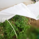 RowTunnel5X24FT-Mini-Greenhouse-Hoop-House-KitsPlant-Cover-Frost-Blanket-For-Season-Extension-and-Seed-Germination-12pcs-Arch-H-2734-Arch-Span-51-66-0-1