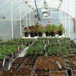Solexx-Conservatory-Greenhouse-16-X-20-X-96-5mm-0