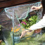 Sungmor-2-Window-Greenhouse-Flower-Plant-Grow-House-w-Strong-Antirust-Steel-Frame-and-Transparent-PVC-CoverWorth-Garden-Hothouse-0-1