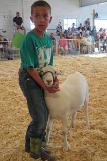 sheep blog 1