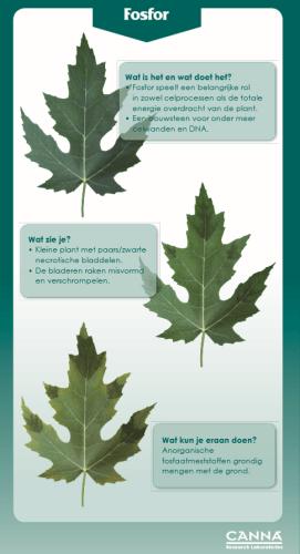 fosfor-en-het-belang-voor-jouw-plant