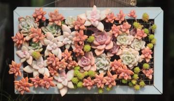 DIY| Πίνακας από φυτά