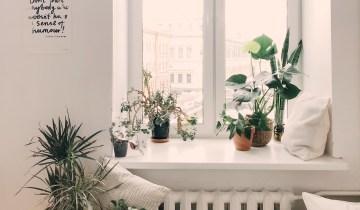 Φυτά που καθαρίζουν την ατμόσφαιρα και ομορφαίνουν τον χώρο μας