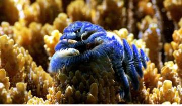 Σε μεγάλο κίνδυνο τα κοράλλια της Μεσογείου
