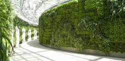 Green roofs and Green walls and Garden from Ambius