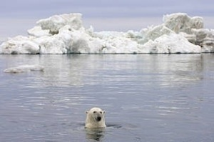 Leaders commit to conservation measures at Polar Bear Forum