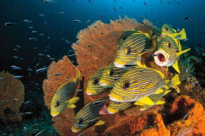 oceans increasing mercury levels may be harming fish