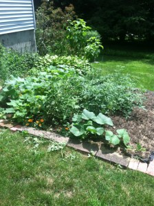 all organic garden