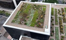Green sustainable travel means producing food locally. Green roof green food